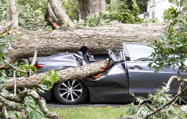 voiture écrasée sous un arbre